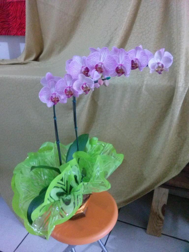 Orquídea liláz