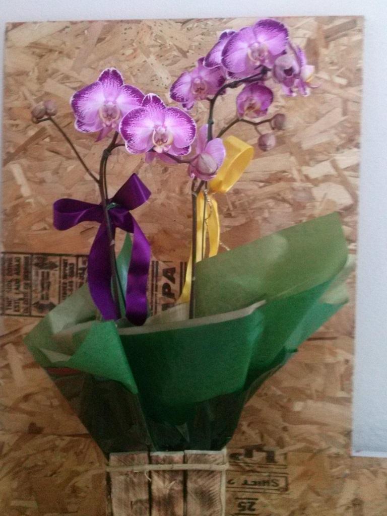Orquídea pinkno cachepo