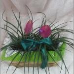 bromelia cachepo