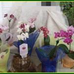 orquideas mini
