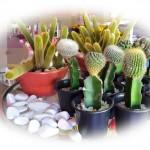 11 cactus