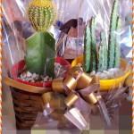 8 cactus
