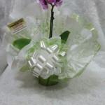 mini orquidea 1