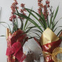 orquidea cymbidium Tijolo